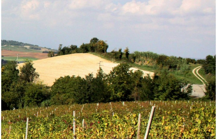 Farm Holiday in Monferrato